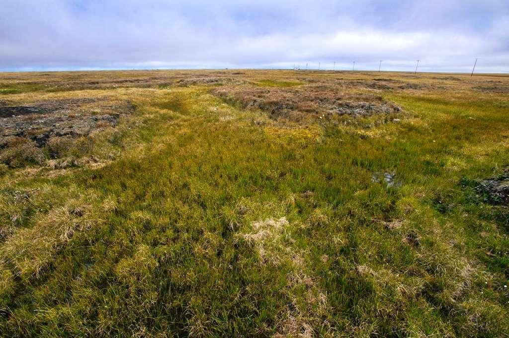Le sol au-delà du cercle polaire arctique près de Barrow, en Alaska, contient une énorme quantité de carbone. De nouvelles recherches pourraient aider les scientifiques à mieux prédire combien de ce carbone sera libéré en fonction du réchauffement climatique. © Berkeley Lab