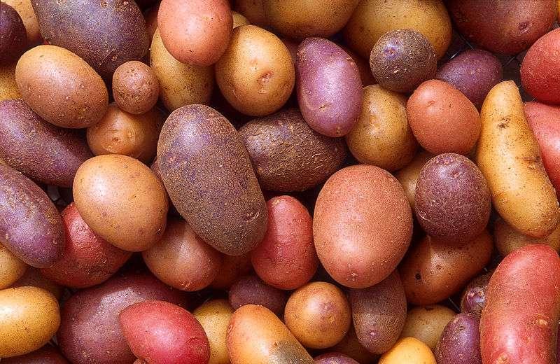 Les variétés de pommes de terre sont nombreuses. © DR