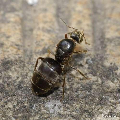 Un myrmécologue étudie les fourmis. © stef_dit_patoc, Flickr CC by nc-sa 2.0