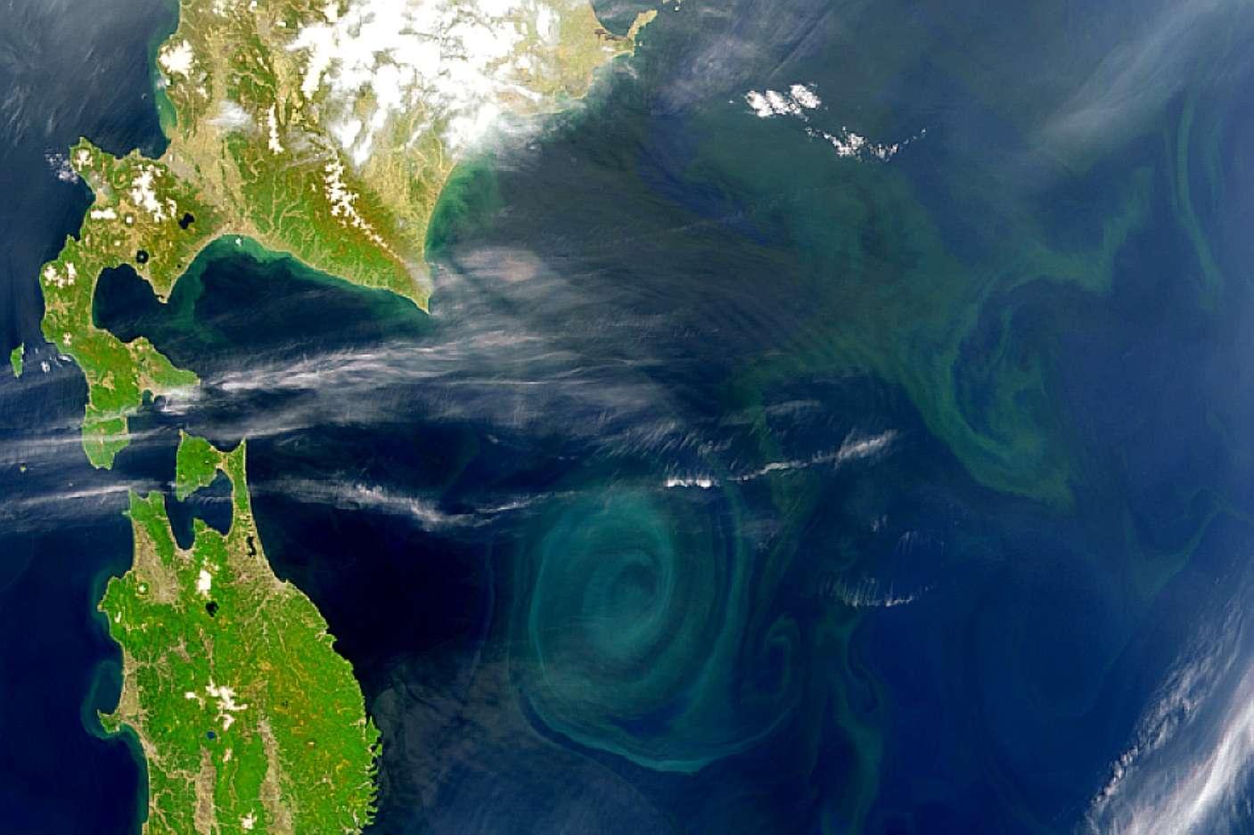 Au large du Japon, on observe bien un tourbillon riche en cyanobactéries planctoniques. Contrairement à ce que les spécialistes pensaient, celles-ci seraient apparues tardivement, il y a moins de 800 millions d'années. Leurs cousines étaient confinées aux bords des mers et océans ou sur les continents. © Nasa, Goddard Space Flight Center et Orbimage