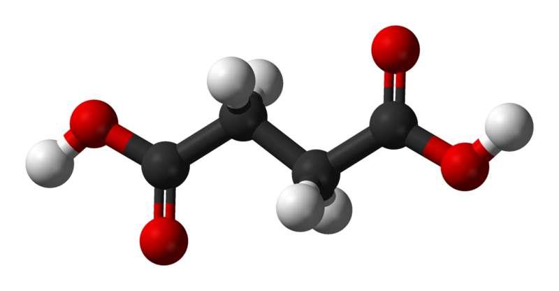 L'acide succinique est la forme protonée du succinate. © Ben Mills, Wikimedia, domaine public