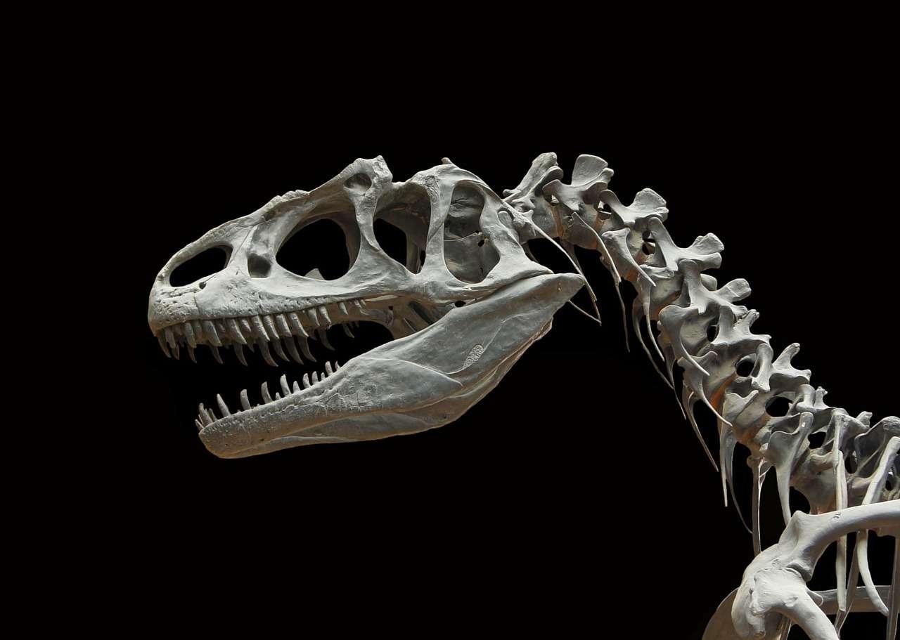 Les derniers dinosaures non aviaires ont disparu il y a 65 millions d'années, à la fin du Crétacé. Seuls quelques représentants des dinosaures ont malgré tout survécu jusqu'à aujourd'hui : les oiseaux. © WikiImages, pixabay.com, DP