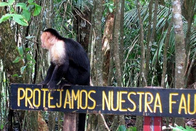 Un capucin au Costa Rica escalade une pancarte sur laquelle est indiqué en espagnol « Protégeons notre faune ». Un des crédos de l'écotourisme. © HBarrison, Flickr, CC by-sa 2.0