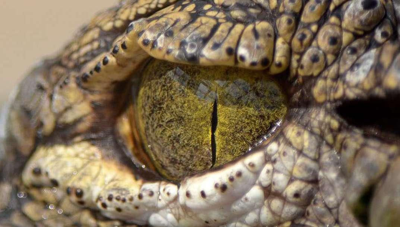 Surprenez-vous avec ces fascinants regards d'animaux