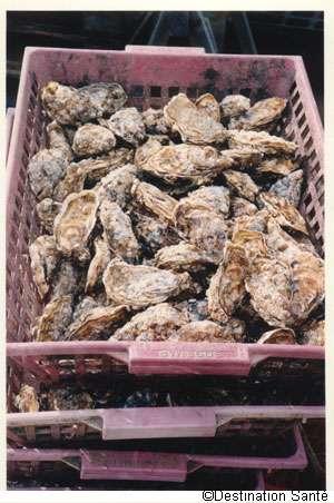 L'huître est de plus en plus victime d'un herpès virus. © Destination Santé