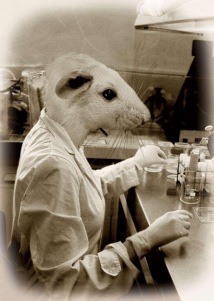 Bien évidemment, une souris humanisée ne correspond pas à un rongeur qui mènerait une vie identique aux humains. Il ne s'agit que d'un modèle animal utilisé pour l'expérimentation scientifique. © Fotos Rotas, Flickr, cc by nc nd 2.0