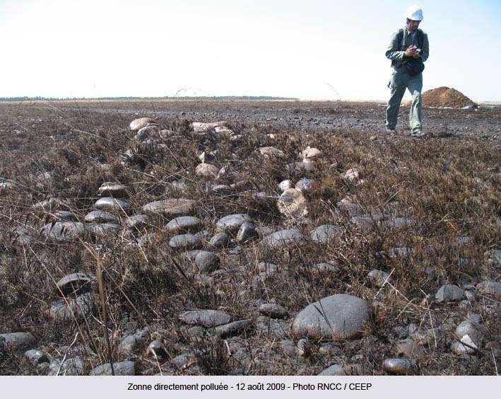 Du pétrole répandu dans la réserve naturelle des Coussouls de Crau. © RNCC/CEEP (photo publiée sur le site de la réserve)