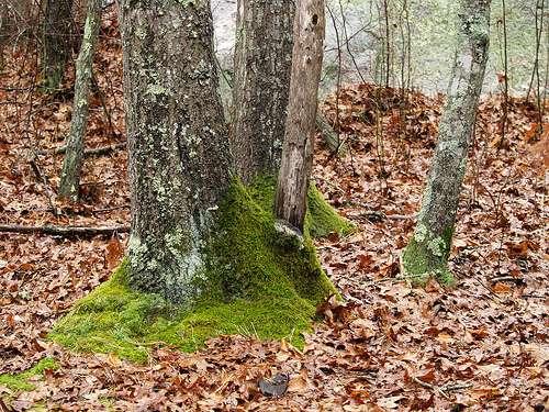 Litière de feuilles mortes en forêt. © Takomabibelot CC by