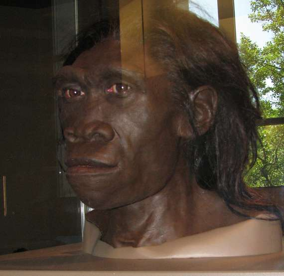 Une reconstitution de la tête d'Homo erectus, présentée au Muséum d'histoire naturelle de Washington. © Robert Goodwin, Flickr, CC by-nc-sa 2.0