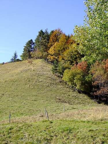 Cette lisière entre prairie et forêt accueille des espèces des prairies qui préfèrent les milieux plus sombres et plus frais et des espèces forestières qui préfèrent la lumière et la chaleur. © Inoteb CC by-nc-nd 2.0