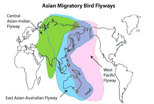 Les routes migratoires d'Asie centrale, avec en bleu la East Asian-Australasian Flyway. © US Fish and Wildlife Service, domaine public