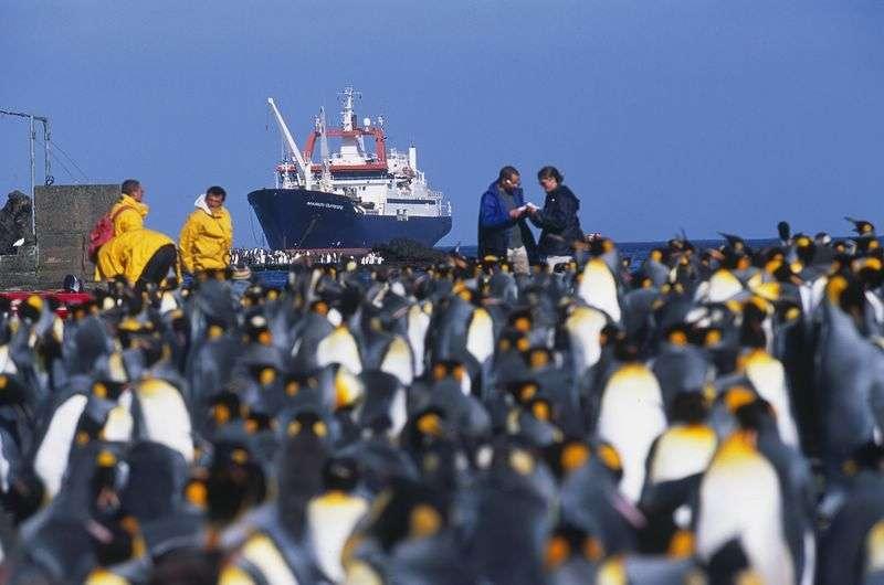 Le navire océanographique Marion Dufresne, qui a récolté certains des basaltes étudiés, ici photographié dans les îles Crozet (océan Indien). © Institut polaire français Paul-Emile Victor