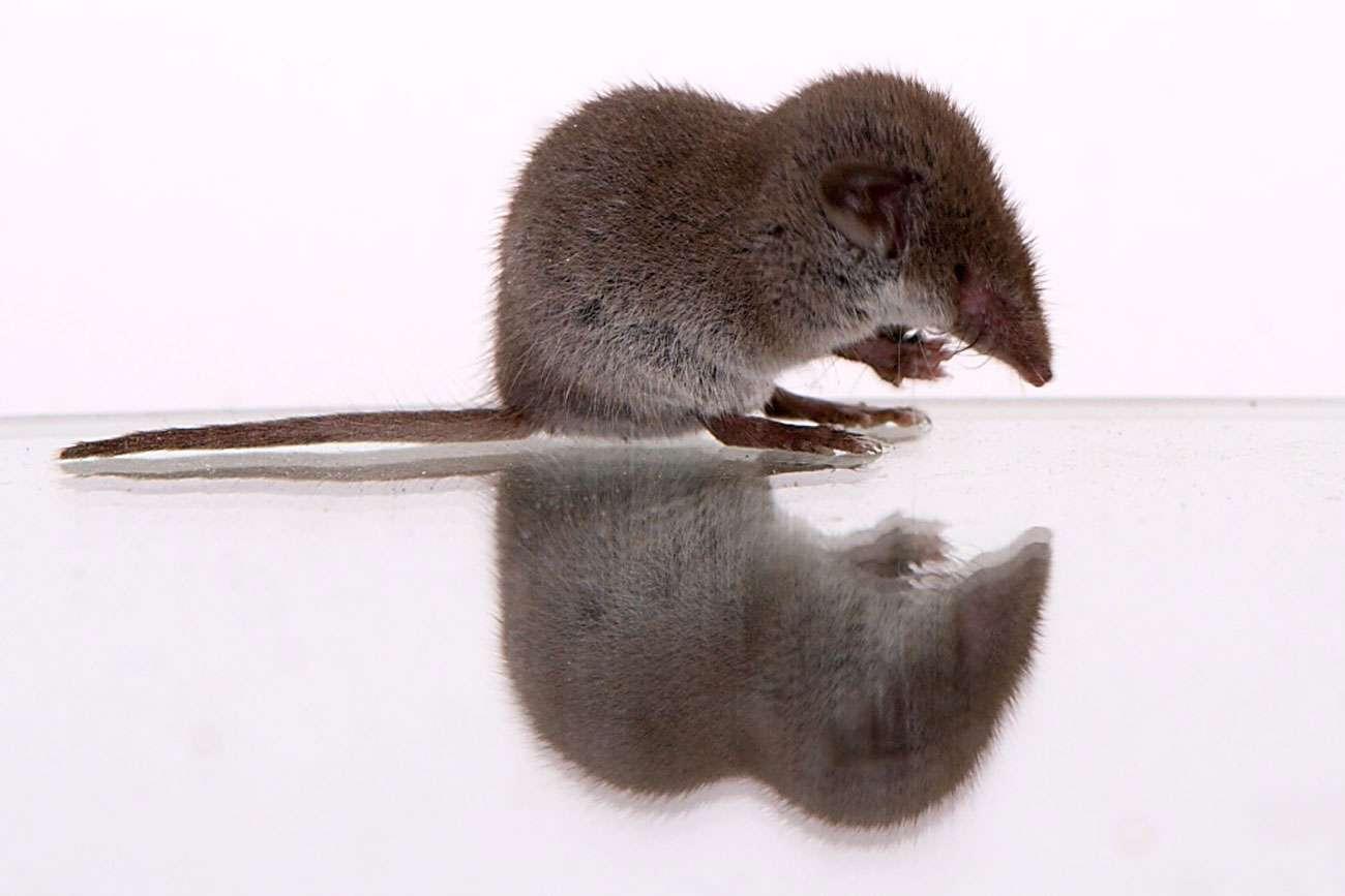 « Nous, les mammifères », un dossier pour mieux comprendre l'histoire des êtres vivants et surtout la nôtre. © DR