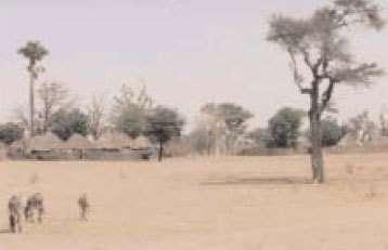Vue d'un village sahélien pendant la saison sèche,zone d'étude de Niakhar, Sénégal©IRD/Jean-François Trape