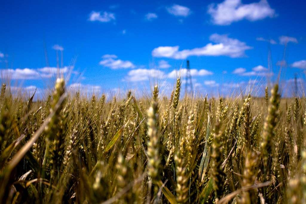 Le mouvement de l'agriculture écologiquement intensive est apparu en 2008 lors du Grenelle de l'environnement. © Kevin Lallier, Flickr, cc by 2.0