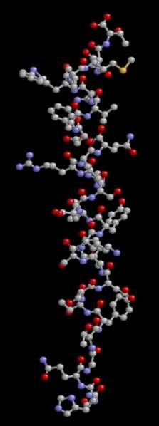 Le glucagon est une hormone peptidique relativement petite. © brian0918, Wikimedia, domaine public