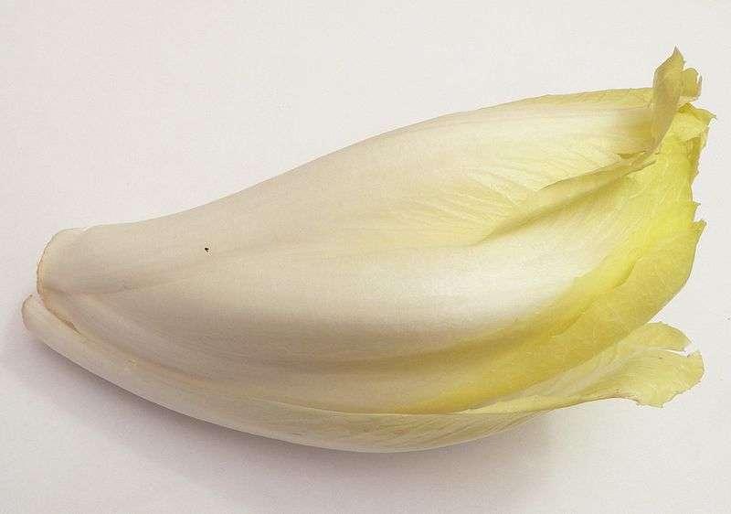 L'endive provient d'une racine de chicorée. Cette dernière est utilisée en raison de sa teneur en inuline, qui agit comme prébiotique. © David Monniaux, Wikimedia Commons, cc by sa 3.0