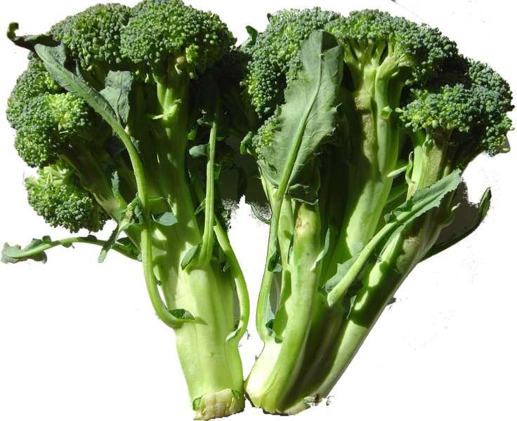 Les brocolis sont une des sortes de choux que l'on peut consommer. © Wikimedia Commons