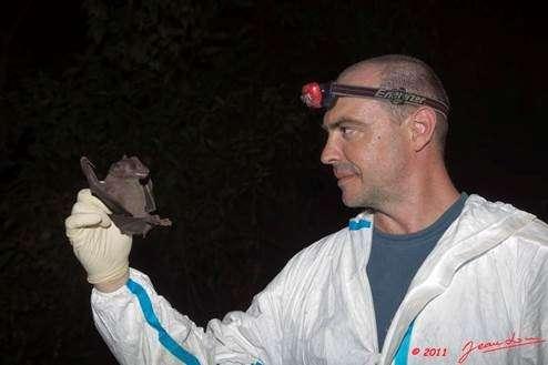 De véritables enquêtes sont nécessaires pour remonter la piste des virus pathogènes. Ici, Mathieu Bourgarel, chercheur au Cirad, vient de capturer une roussette (Rousettus aegyptiacus) dans une grotte du Gabon. © Cirad, J. L. Albert