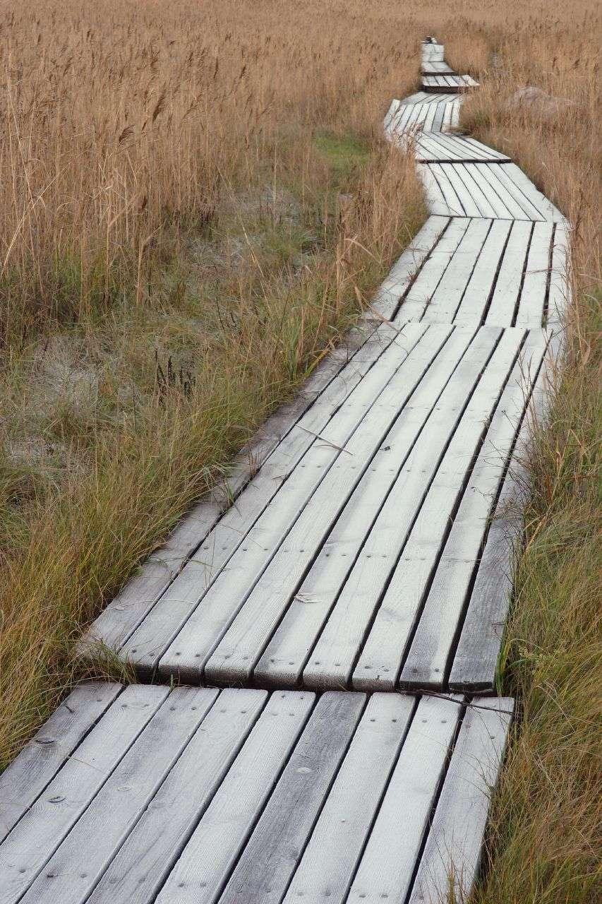 Les caillebotis sont plus pratiques qu'esthétiques. Ils peuvent par exemple former un chemin au milieu des étangs pour la chasse aux canards. © The RedBurn, cc-by-sa-2.0., Wikimedia Commons