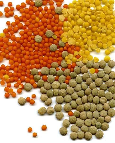 Les variétés de lentilles se caractérisent principalement par leurs couleurs. © DR