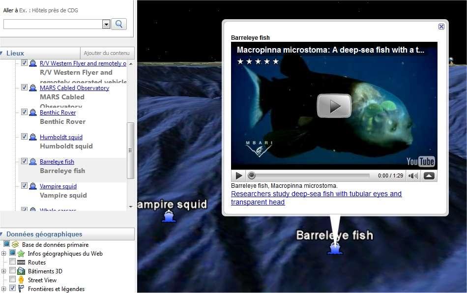 Le Barreleye fish, un poisson étonnant dont les yeux (les demi-globes de couleur verte) sont situés à l'intérieur d'un crâne transparent. Retrouvez les détails de sa découverte sur l'article que lui avait consacré Futura-Sciences. © MBARI/Google