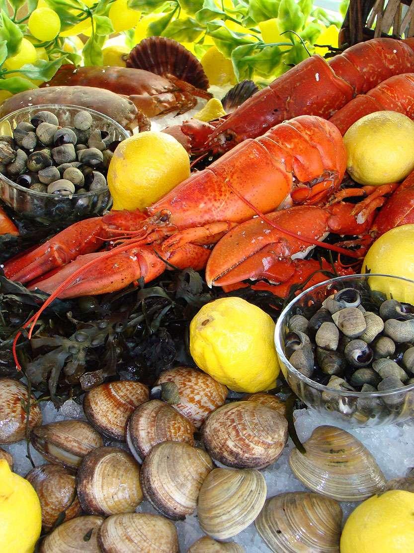 Les coquillages, un délice riche en cuivre - Source : Claireliot - Fotolia.com