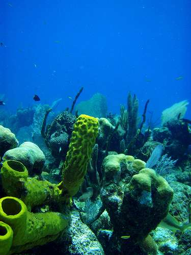 Par le passé, les coraux ont déjà résisté à des changements environnementaux dramatiques. Y arriveront-ils encore une fois ? © Mikebaird CC by