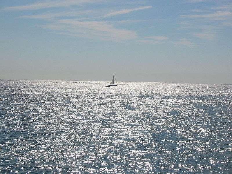 Depuis une dizaine d'années, la mer Méditerranée est colonisée par une algue tropicale. © Vinbaron, Wikimedia, GFDL