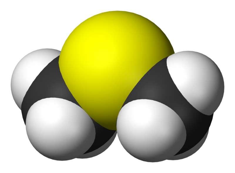 En chimie, les DMS sont des sulfures de diméthyle, composés soufrés dont la formule moléculaire est (CH3)2S. © Benjah-bmm27, Wikipédia, DP