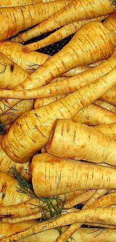 Le panais est un légume oublié qui ressemble à la carotte. © Licence Creative Commons
