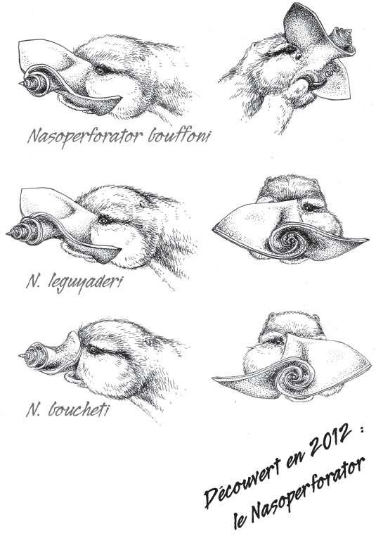 Trois nouvelles espèces de rhinogrades ont été découvertes par une équipe de chercheurs du Muséum national d'histoire naturelle. © Futura-Sciences/Dunod