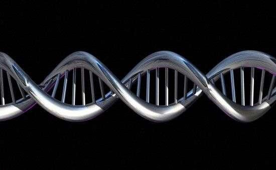 L'ADN de chaque individu possède environ 3,4 milliards de paires de nucléotides. Ce génome contient les informations nécessaires pour faire fonctionner l'organisme. © Spooky Pooka, Wellcome Images, cc by nc nd 2.0