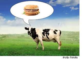 La maladie du hamburger causée par la consommation de viande contaminée pourrait un jour disparaître. © Olly, Fotolia