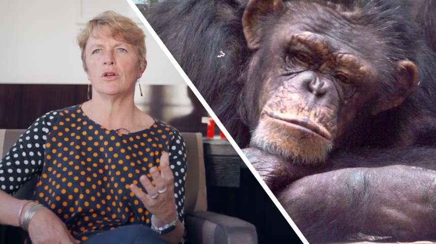 Interview : trois bonnes raisons de sauver les primates