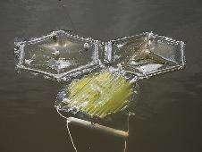 Les membranes semi-perméables des sacs permettent à l'eau douce de diffuser mais empêchent le sel d'entrer et retiennent les algues et les nutriments (eaux usées). Elles permettent aussi aux algues d'utiliser la lumière solaire pour capter dans le CO2 et le transformer en huile. © Penny Slinger Hills