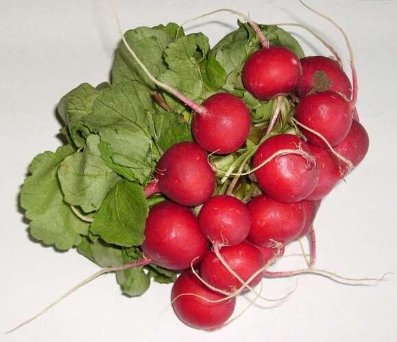 Les radis rose sont des légumes très appréciés en été. © DR