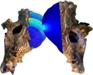 Les simulations avec éléments finis montrent que les crânes de pachycéphalosaures supportaient les collisions. Crédit : Chris Kriegner, Tetsuto Miyashita