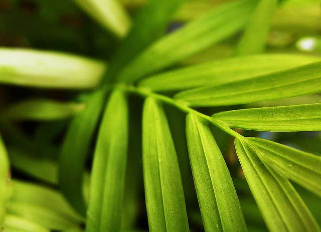 Les plantes mésophytes affectionnent les températures ni trop chaudes, ni trop froides. © Brownlow, Flickr, cc by nc nd 2.0