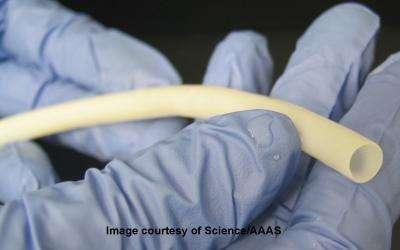 L'artère biosynthétique a été réalisée à partir de cellules musculaires. © Image courtesy of Science/AAAS