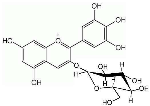 Ce pigment d'anthocyane est un hétéroside. © Luca Laghi, Wikimedia CC by-sa 3.0