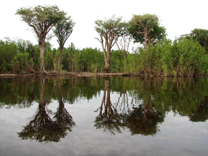 Le parc national de Jaú au Brésil représente le plus grand domaine de forêt tropicale protégée d'Amérique du Sud. D'une superficie d'environ 23.000 km2, c'est l'une des régions les plus riches de la planète sur le plan de la biodiversité. © Kellyresende, fotopedia, cc by sa 3.0