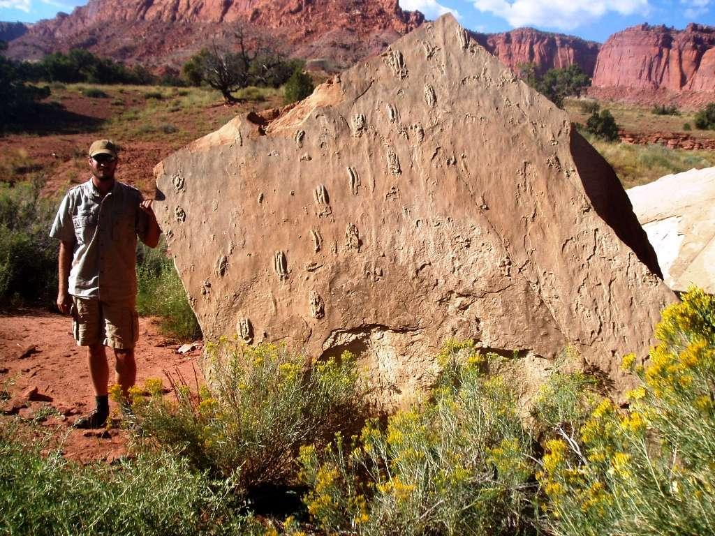Ces empreintes de tétrapodes datant du début du Trias ont été trouvées dans une région de l'Utah, aux États-Unis, occupée par le Capitol Reef National Park. Le paléontologue Tracy Thomson se tient à côté des traces fossilisées. Les animaux qui les ont laissés devaient flotter partiellement dans des eaux de moins d'un mètre de profondeur. © Tracy Thomson