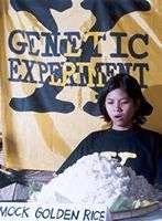 Du riz transgéniqueCrédit : http://www.greenpeace.fr/