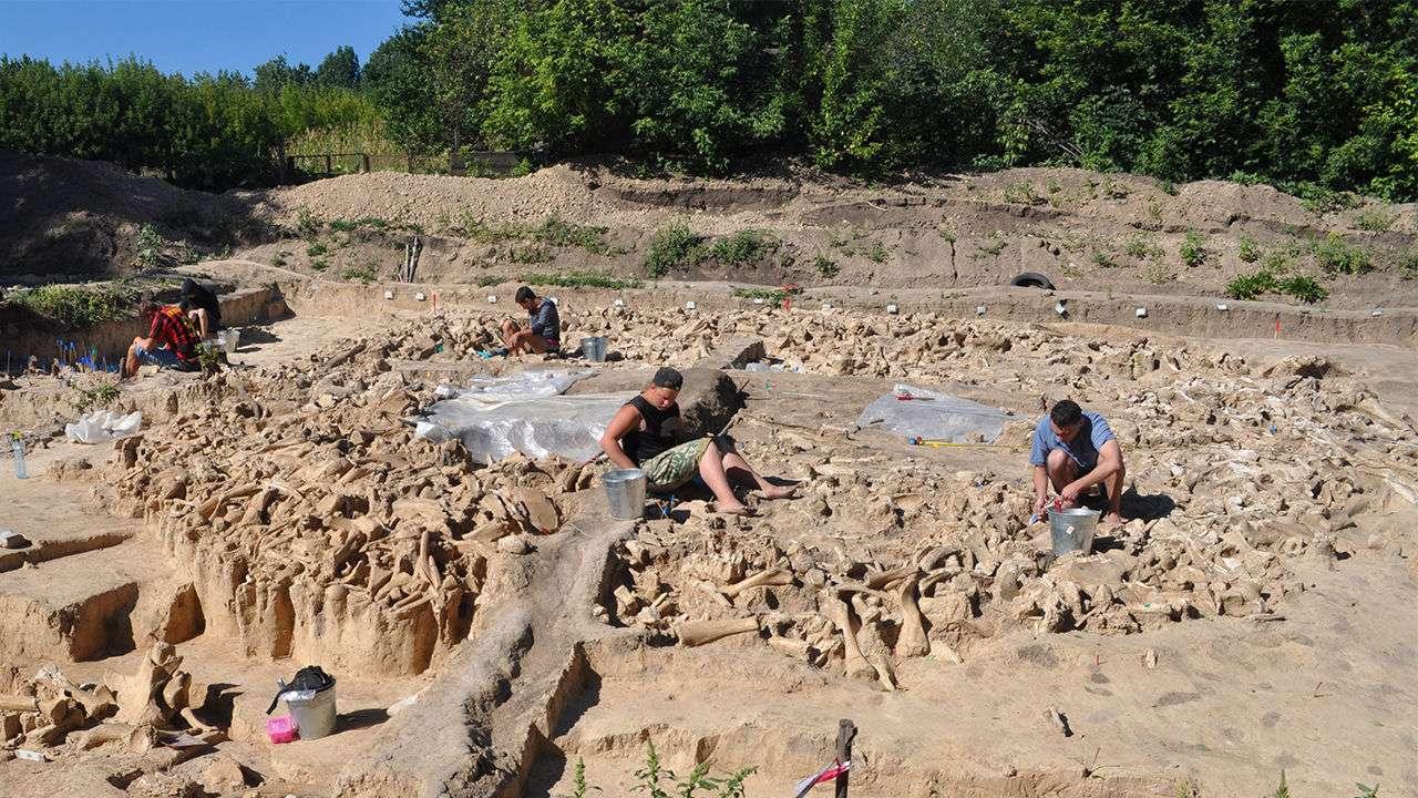Les restes d'un mur circulaire fait d'os de mammouth érigé il y a 25.000 ans pour une raison encore obscure. © Alex Pryor