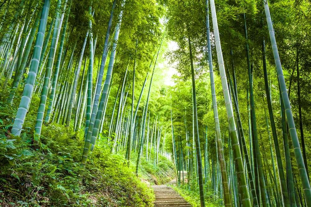 En 25 ans, la surface de forêt sur Terre a diminué de 3,1 %. Le taux annuel est descendu à 0,08 %. © 06photo, shutterstock.com