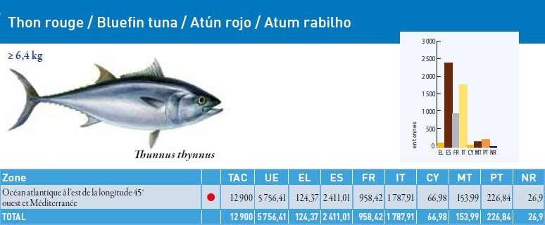 Le TAC du thon rouge, pour 2011, est de 12.900 tonnes et de 5.756 tonnes pour l'Union européenne. Le point rouge signifie que le stock ne se trouve plus dans la limite biologique de sécurité. Malgré cela, on pêche... © Commission européenne 2011