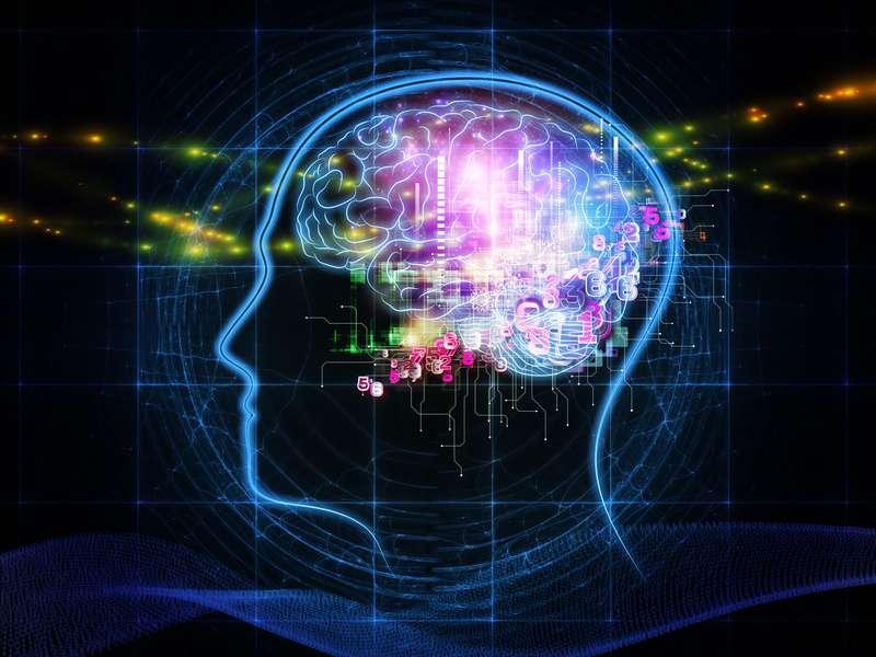 Le cerveau humain est un immense réseau de neurones qui communiquent par le biais de nombreuses synapses excitatrices et inhibitrices. Chez les épileptiques, le cerveau est hyperactif ce qui peut entraîner de fortes convulsions. © DR