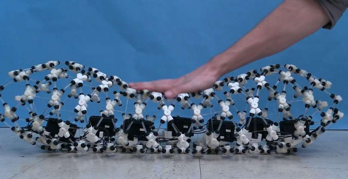 Composé de dizaines de pièces articulées reliées entre elles et actionnées par des moteurs électriques, ce robot reproduit fidèlement le péristaltisme, un ensemble de contractions musculaires dont se servent les vers de terre pour se déplacer en modulant la taille de leur corps. © Andrew Horchler, Case Western Reserve University Biorobotics Lab, Vimeo
