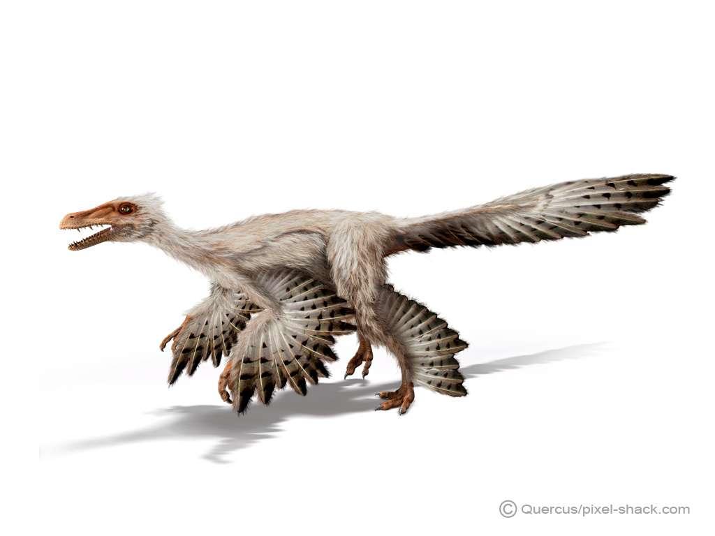 Le Microraptor fait partie des petits dinosaures. © Courtesy of Jon Hughes, www.pixel-shack.com